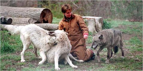 h-grimaud-et-les-loups